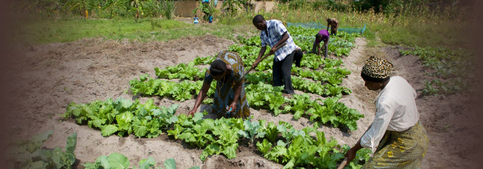 agriculture-nutrition