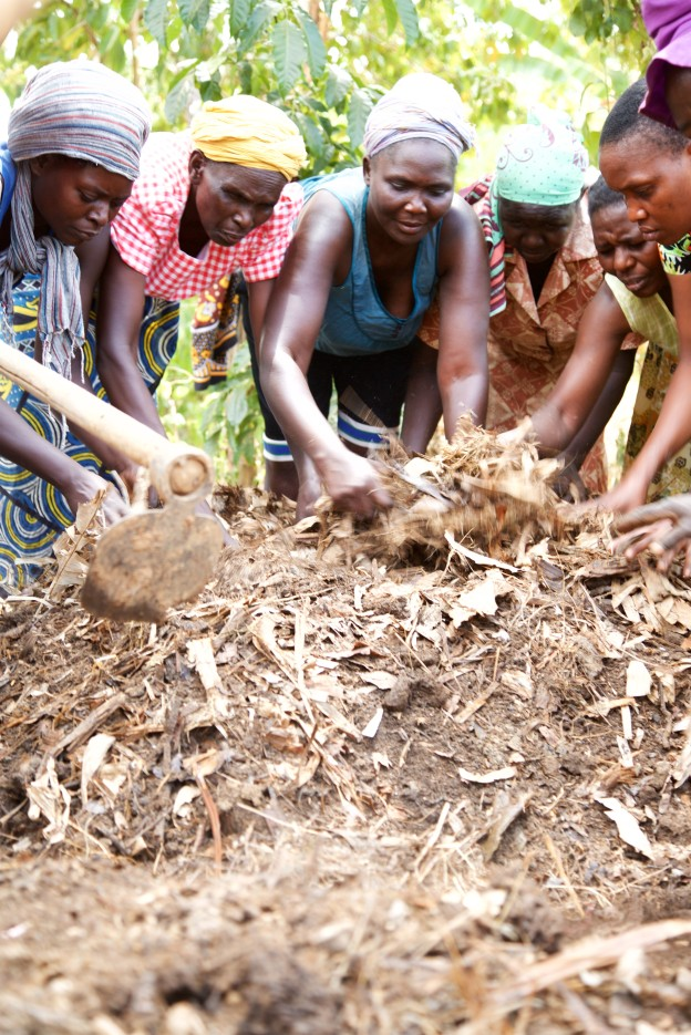 Community group organic compost production, laying animal dung, green matter and water