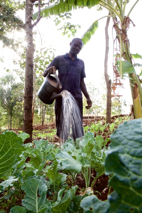 Utilising kitchen gardening techniques in Bungoma County